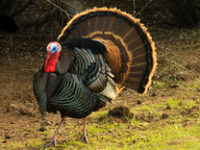 Library Hours for the Thanksgiving Day Weekend